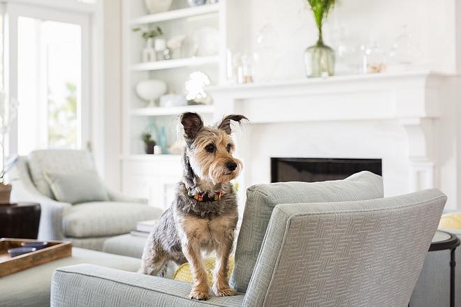 Pets Pets Living Room #pets #livingroom